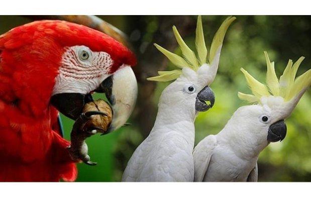 world-best-parrots